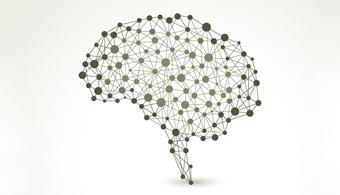 Fonte: Shutterstock O hábito de ler diferentes tipos de obras desenvolve uma alta conectividade no córtex temporal esquerdo